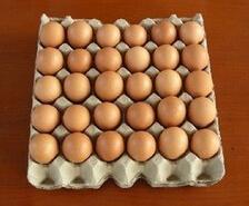 30枚黄蛋托
